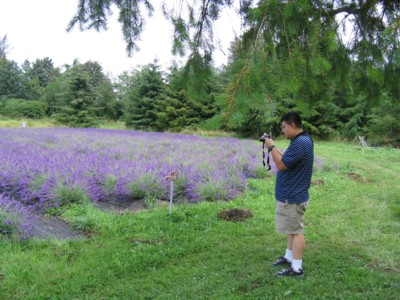 Vincent photographing the lavender