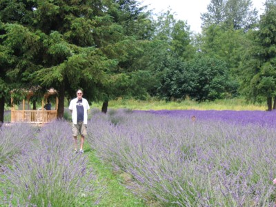 Vin in a field of lavender
