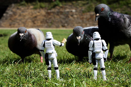 Recruiting some pigeons for the Imperial Navy